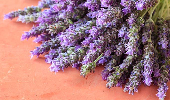 lavender-benefits-health
